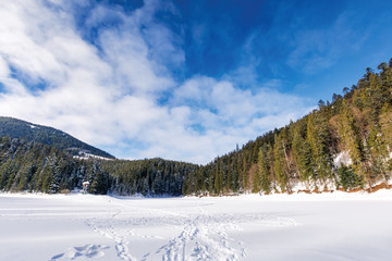 frozen and snow covered lake synevyr. beautiful winter landscape of carpathian mountains. wonderful scenery among spruce forest. popular travel destination of transcarpathia, ukraine