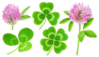 Isolated clovers. Collection of clover leaves and flowers isolated on white background with clipping path