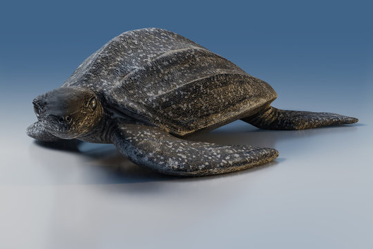 3d rendering of Leatherback turtle or Dermochelys coriacea, isolated on blue tone background with clipping paths.