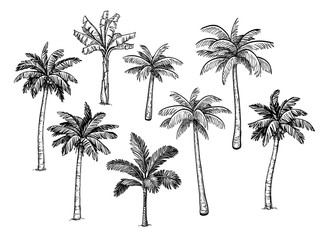 Collection of palm trees. Wall mural