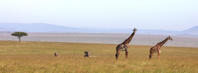 Giraffes and elephants banner Wall mural