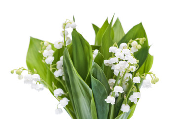 Wall Murals Lily of the valley Bouquet of white lilies of the valley isolated on white.