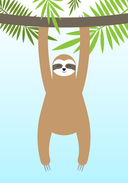 Vector flat cartoon sloth hanging on palm tree branch isolated on blue sky background