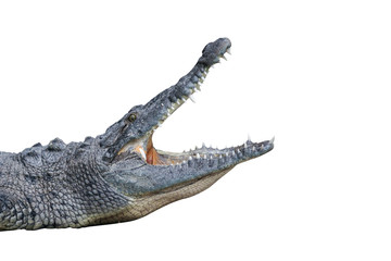 Poster Crocodile Krokodil mit offenem Maul