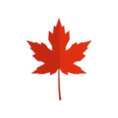 Fototapeta Red vector maple leaf in flat style obraz