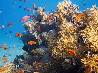 Colorful under water life in Red Sea, Aqaba, Jordan