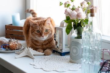 A cute ginger cat sitting on a windowsill.