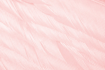 Wall Mural - Beautiful soft pink vintage color trends feather pattern texture background