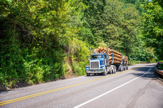 Blue big rig semi truck transporting tree logs on the semi trailer driving on the green road with forest on the sides