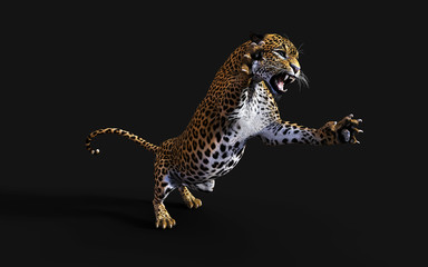 3d Illustration Leopard Isolate on Black Background with Clipping Path, Panthera Pardus