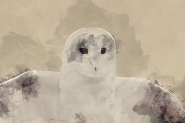 Fototapete - Watercolor painting of Barn owl bird of prey