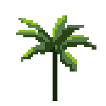 Palm tree. Isolated on white. Vector illustration. Pixel art.