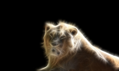 Fractal image of the king of the beasts of a lion on a contrasting black background