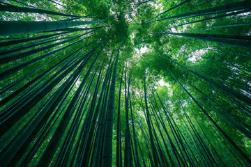 Photo sur Plexiglas Bamboo Photograph of park of bamboo forest