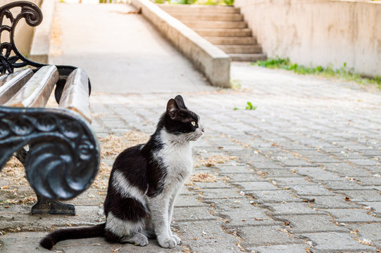 Dirty black and white colored stray cat sitting near a bench