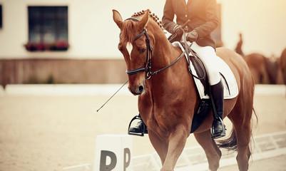 Equestrian sport. Portrait sports stallion iin the double bridle.