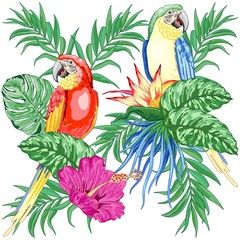 Photo sur Plexiglas Draw Macaws Parrots Exotic Birds on Tropical Flowers and Leaves Vector Illustration