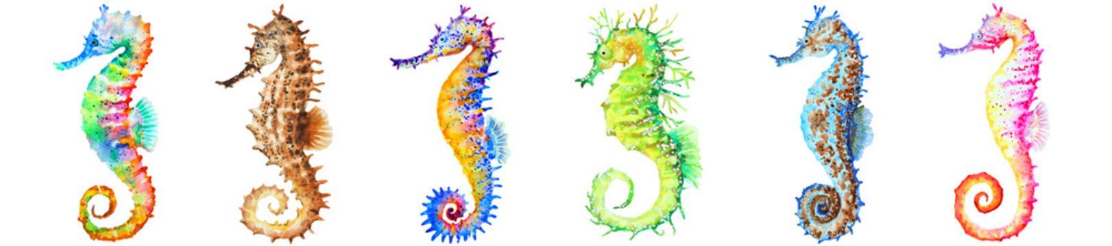 Group of colorful seahorses, panorama, watercolor.