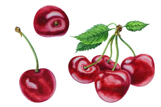 Set of ripe red cherries, hand drawn watercolor.