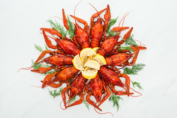 top view of red lobsters, lemon slices and green herbs on white background