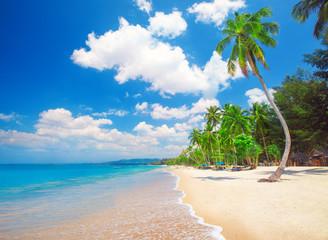 Fototapete - beach and coconut palm tree