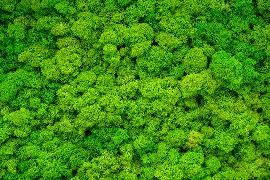 Artificial green moss wall for garden decor. Backgrounds and Textures
