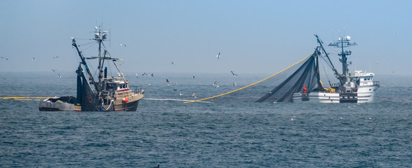 Commercial squid fishing boats work around the clock, including daylight hours, using purse seine nets as squid return to the waters of the Monterey Bay., off the coast of central California.