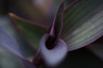 Aubergine Floral