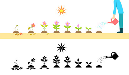 Time lapse flower plant growing in vector art