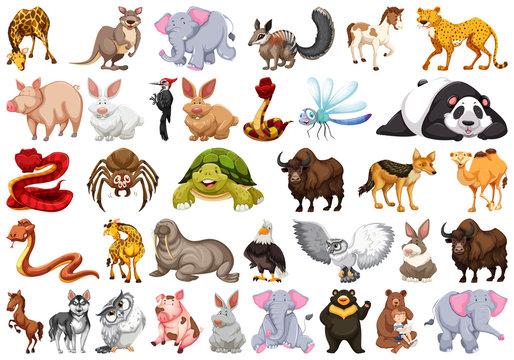 Set of different animals