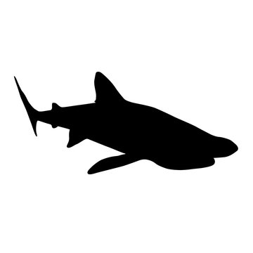 Basking Shark Silhouette Underwater Vector