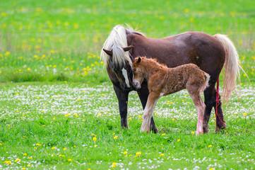 Pferde - Mutterliebe