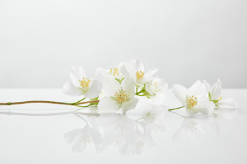 fresh and natural jasmine flowers on white surface