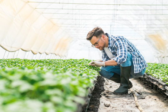 Organic farming concept. Young farmer working at bright greenhouse.