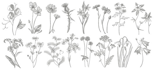 Collection of hand drawn flowers and herbs. Botanical plant illustration. Vintage medicinal herbs sketch set of ink hand drawn medical herbs and plants sketch. Wall mural