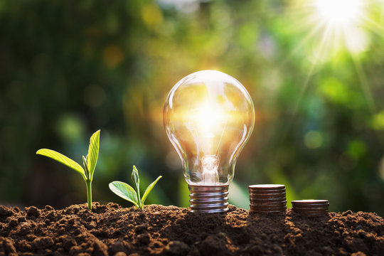 lightbulb with tree and coins on soil sunshine background concept saving energy and finance