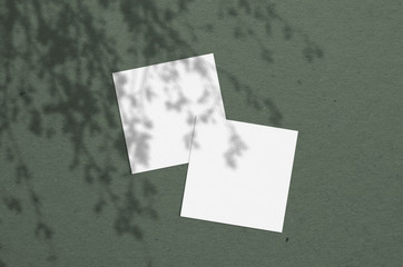 square business card Mockup. Natural overlay lighting shadows the leaves. Scene of Leaf Shadows.