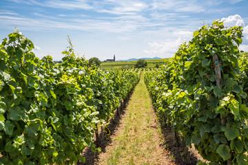 Fotobehang Platteland Weinberge mit Blick auf ein Dorf im Elsass, Frankreich