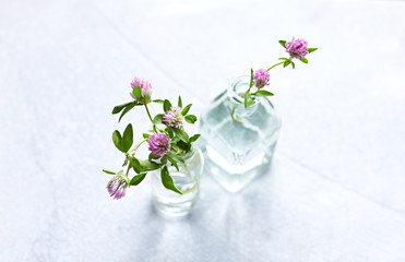 Red clover flowers in glass bottles. White background. Copy space