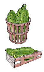 Collection of  green  hand drawn cucumbers, box and basket. Ink and colored sketch. Color elements isolated on white background.