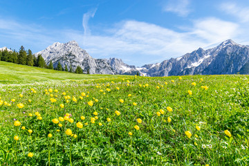 Wall Mural - Summer alps landscape with flower meadows and mountain range in background. Photo taked near Walderalm, Austria, Gnadenwald, Tyrol Region