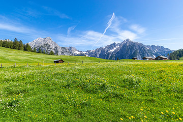 Wall Mural - Alpine flower meadows with majestic Karwendel Mountain Range. Photo taked near Walderalm, Austria, Gnadenwald, Tyrol Region