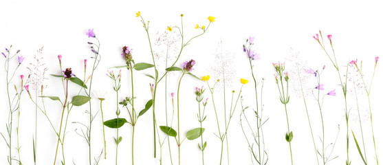 Tuinposter Bloemen Creative flat lay border of wildflowers, isolated on white background, top view.