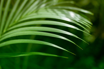 Palm green leaf. Tropical plants. Nature background.