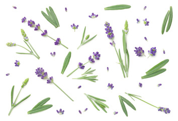 Keuken foto achterwand Lavendel Lavender Flowers Isolated On White Background