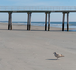 Solitary Seagull on Beach by Fishing Pier at Low-tide
