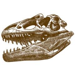 engraving illustration of tyrannosaurus skull