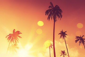 Foto op Plexiglas Zee zonsondergang Tropical palm tree with colorful bokeh sun light on sunset sky cloud abstract background.