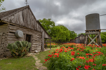 Gardens of red poppies along antique well and cabin