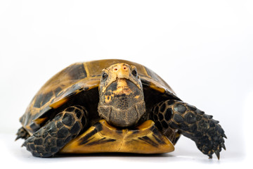 Inland turtles in Asia are called